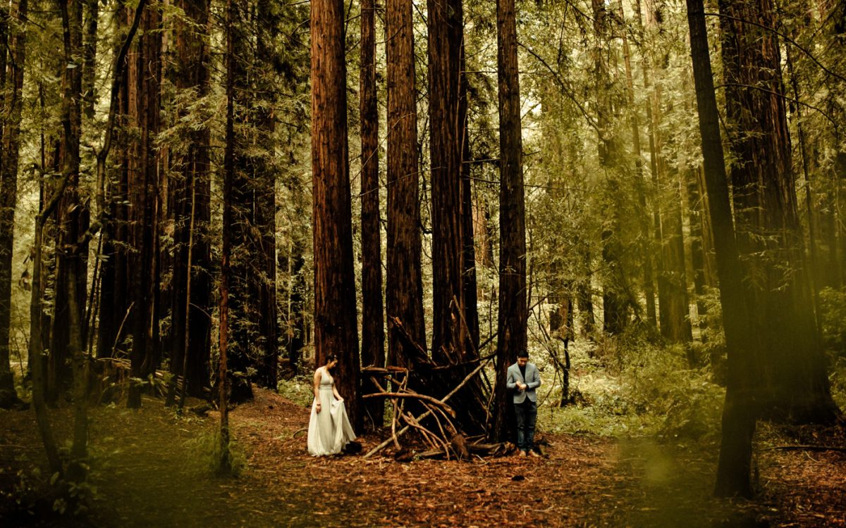 The Forest of the Nisene Marks State Park Engagement