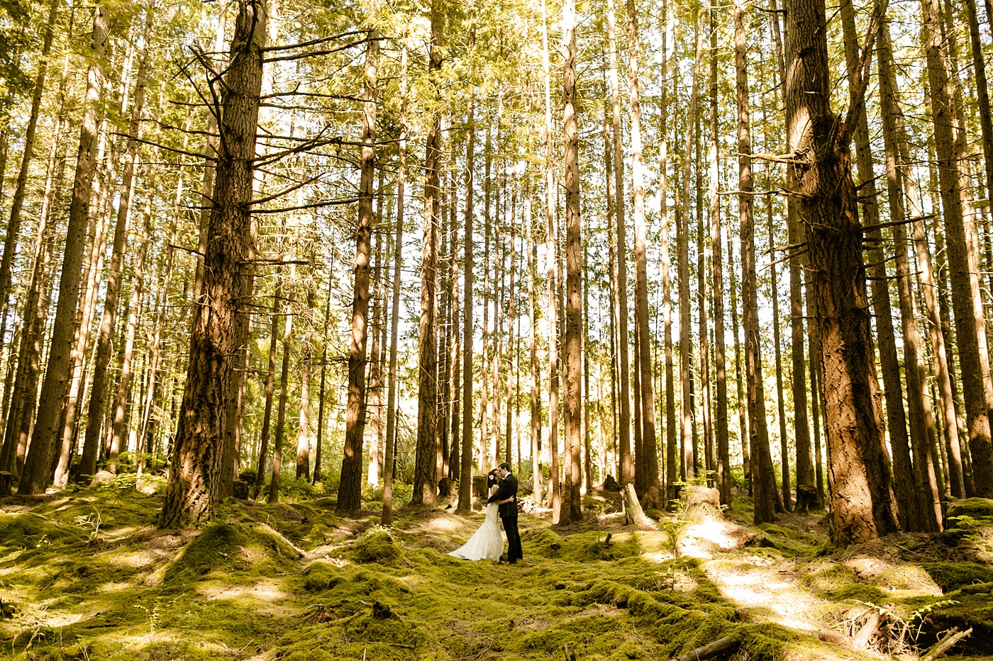 bride and groom standing in the middle of the forest, elopement photographer, venue in the woods, moss covered floor, washington adventure elopement locations