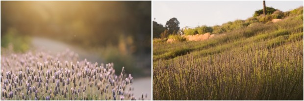 My-Own-5-Year-Anniversary-Couples-Session-Keys-Creek-Lavender-Farm-Southern-California-Flower-Field-Destination-Wedding-Photographer-82.jpg