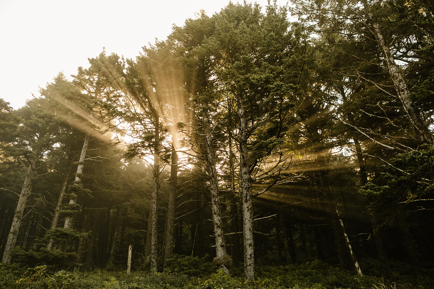 sun rays coming through the trees in cannon beach oregon