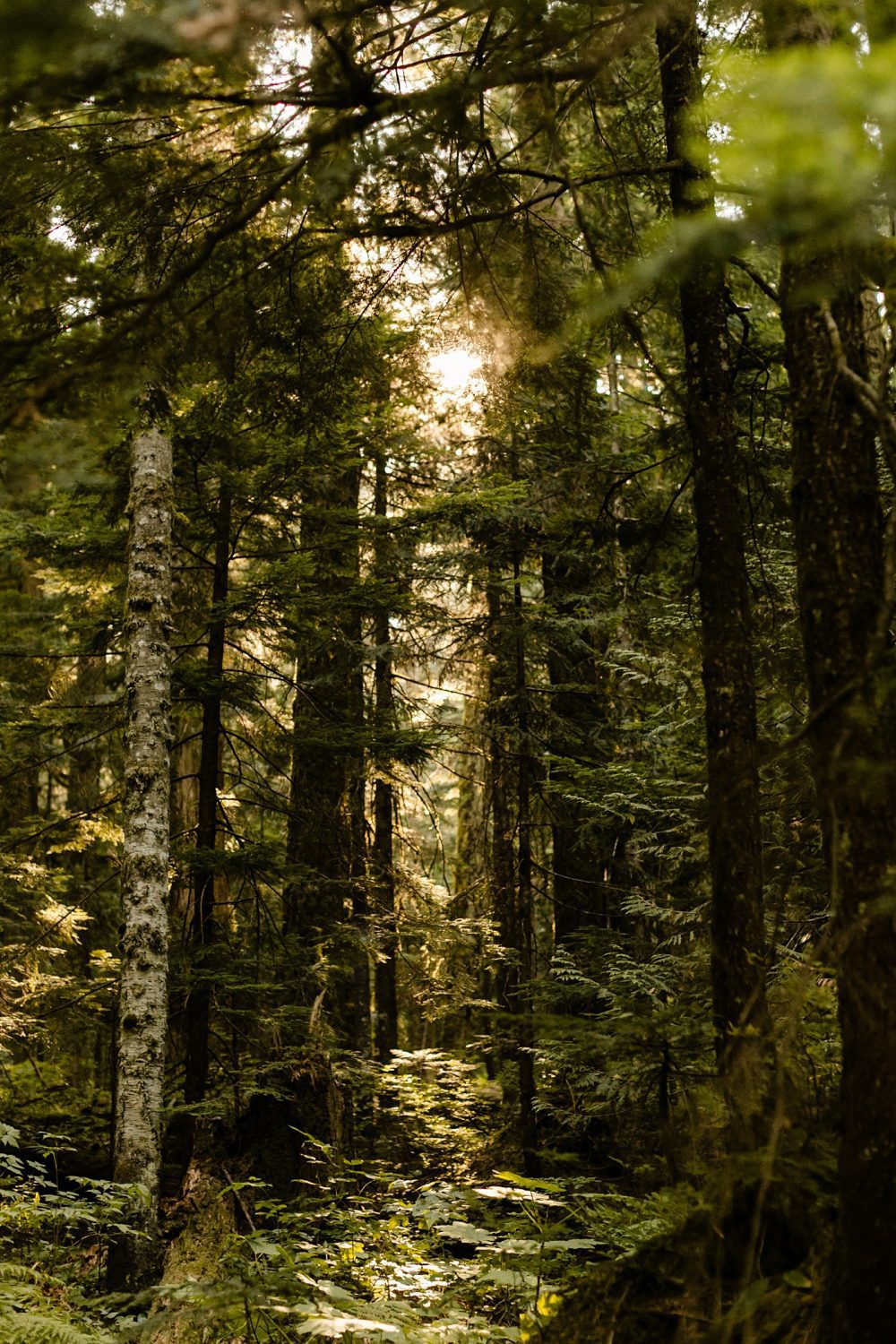 PNW elopement locations in the woods sunrise