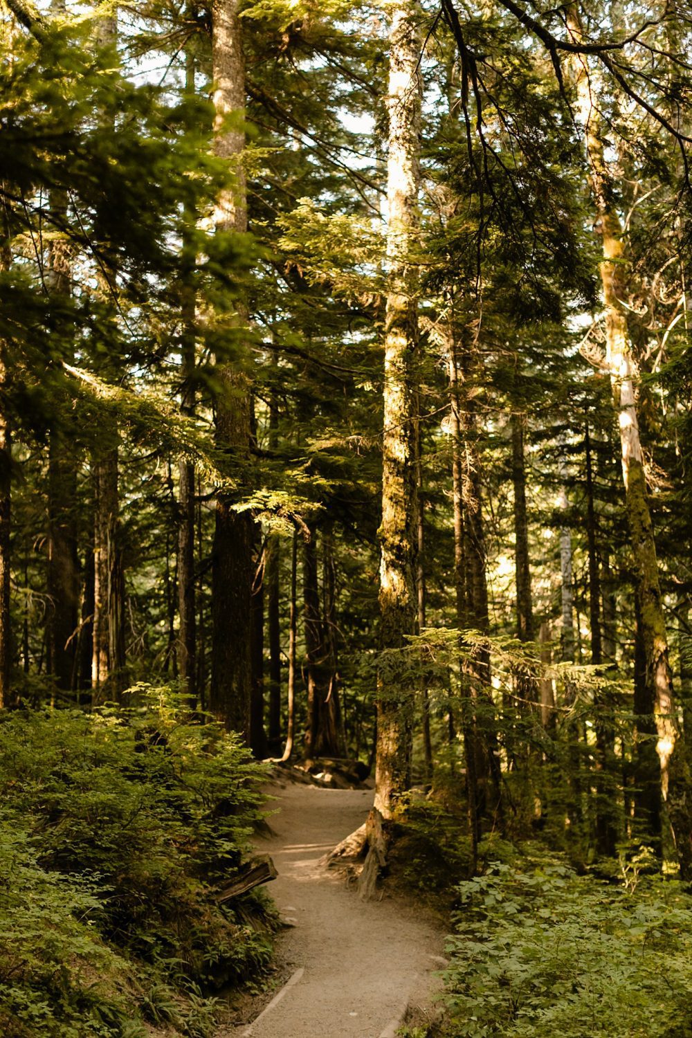 PNW elopement locations in the woods